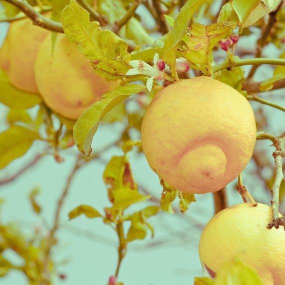 Keri Bevan Lemons