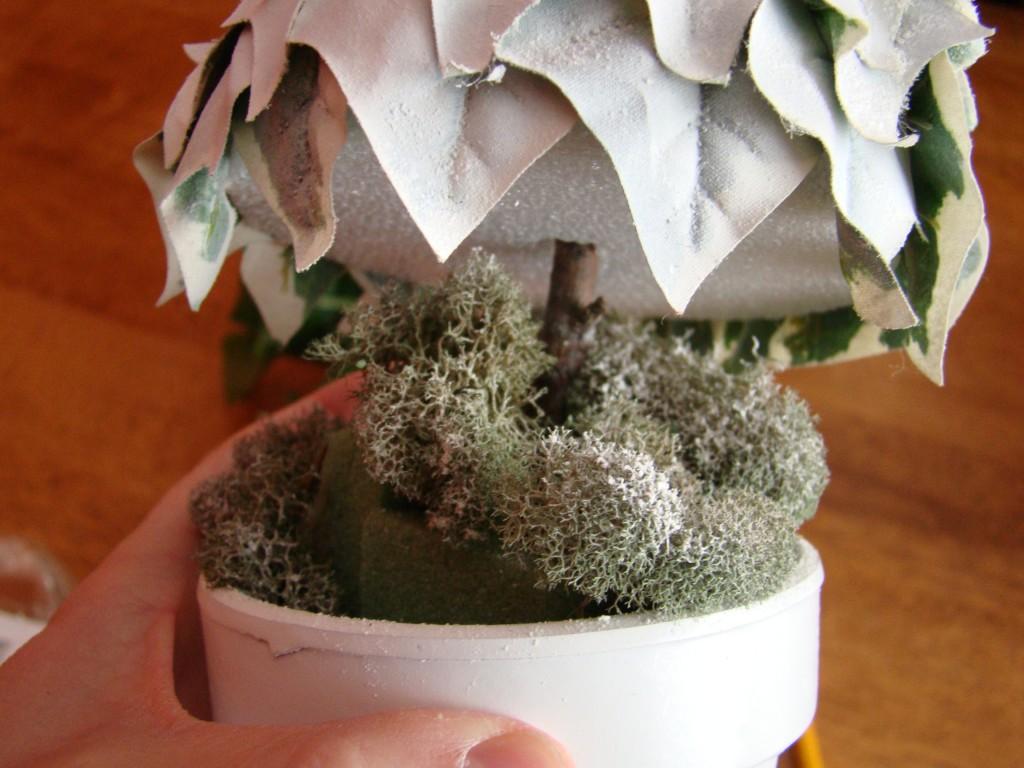 Winter tree in pot
