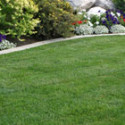 Guest Post:  Green Grass Beneath When the White Snow Retreats: Winter Lawn Care