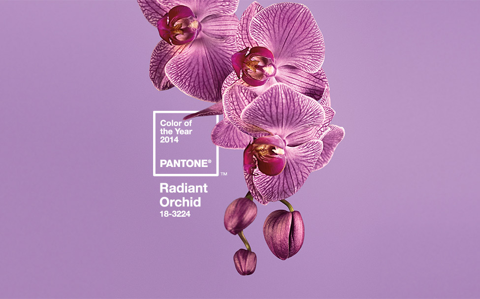 color, year, 2014, trend, pantone, radiant, orchid