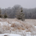 A Winter Color Scheme:  Color Inspiration From Nature